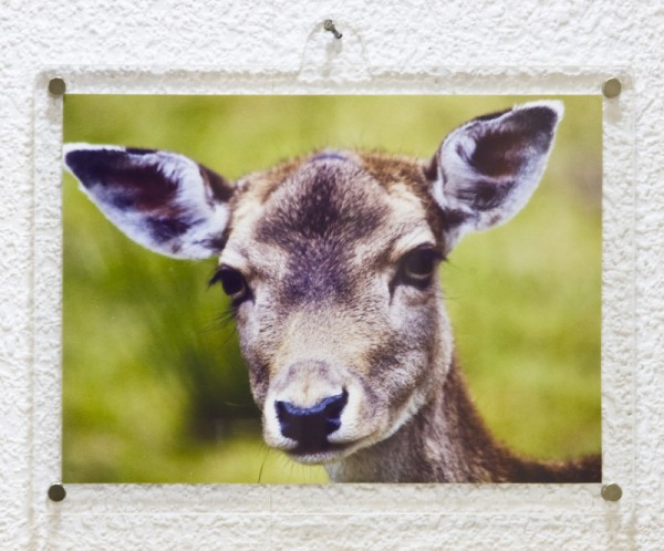 Magnetic Frame 13 x 18 with transverse wall-mounting